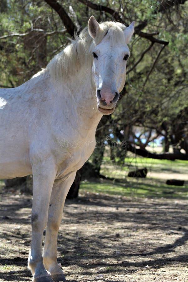 Het zoute Wild paard van de Riviercanion royalty-vrije stock foto