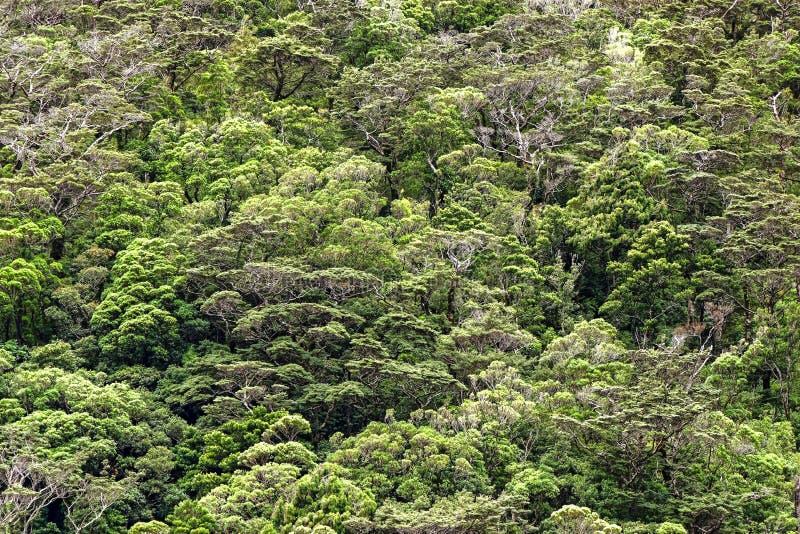 Het Zuideneiland van Nieuw Zeeland - Regenwoud bij Milford-Geluid stock fotografie