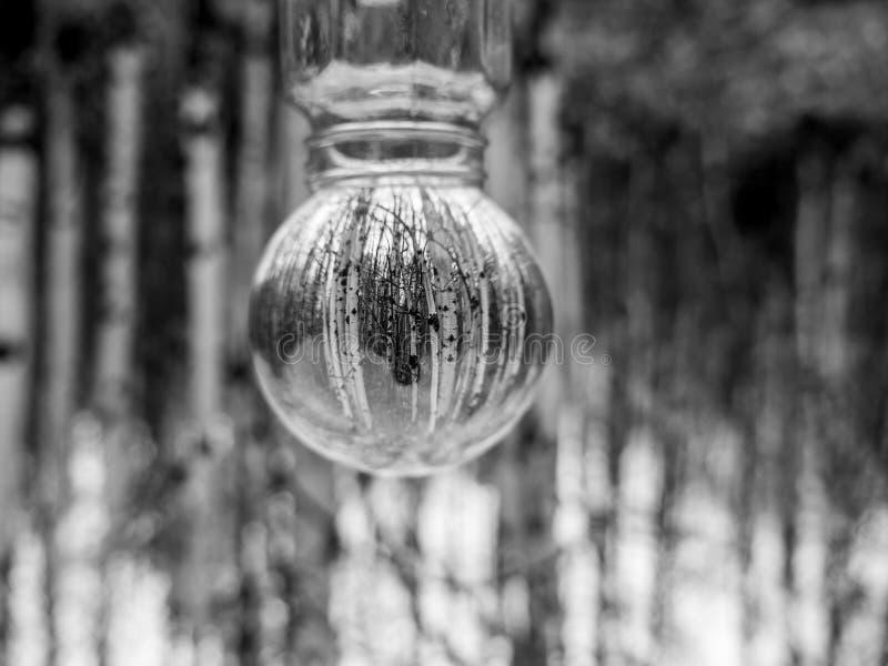 Het Zwart-witte Beeld van Berkbomen royalty-vrije stock afbeeldingen