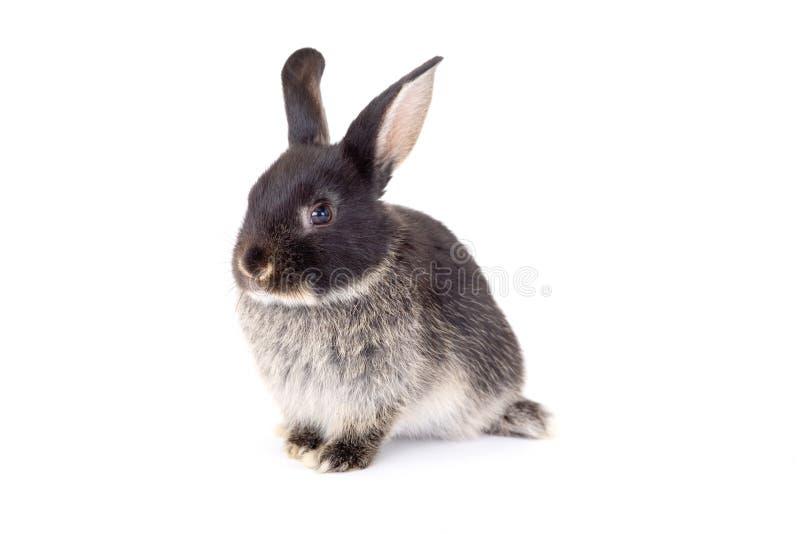 Het zwart-witte konijntje, isoleert royalty-vrije stock fotografie