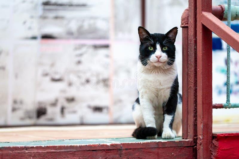 Het zwart-witte portret van de straatkat stock foto's