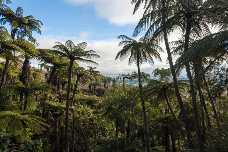 Het zwarte bos van boomvarens royalty-vrije stock afbeeldingen