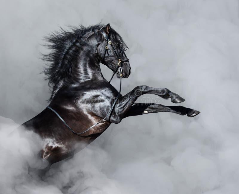 Het zwarte $ce-andalusisch paard grootbrengen in rook stock afbeeldingen