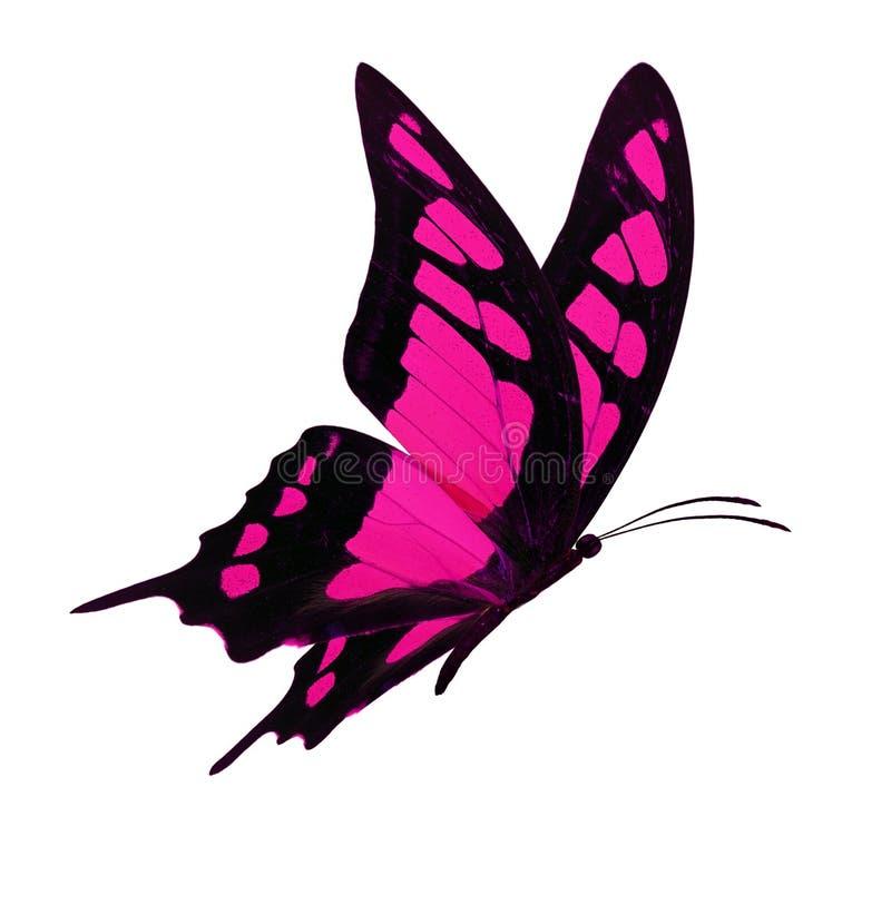 Het zwarte en roze vlinder vliegen stock fotografie