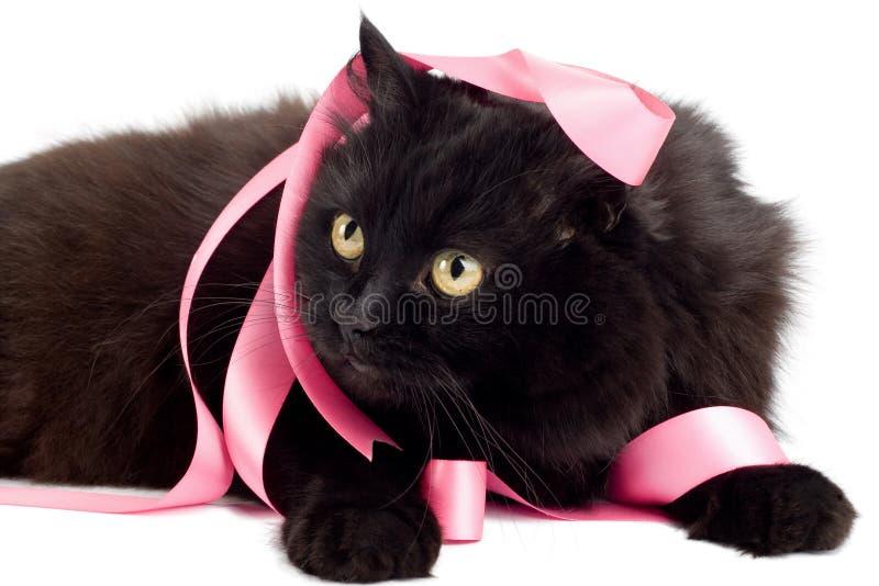 Het zwarte kat spelen met roze lint stock foto