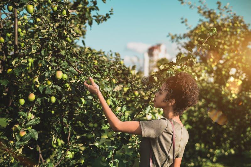 Het zwarte meisje neemt appel van boom in park op royalty-vrije stock afbeeldingen