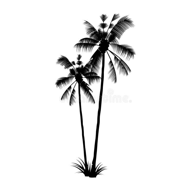 Het Zwarte Palmsilhouet Exotische Tropische boom stock illustratie