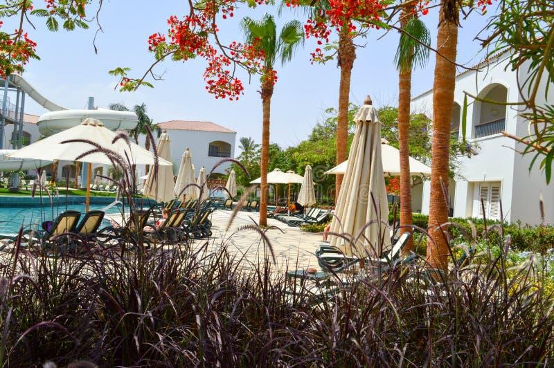 Het zwembad met duidelijke blauwe waterchaise-longues met zonparaplu's en de palmen op een tropische warme overzees nemen, rust z stock foto's