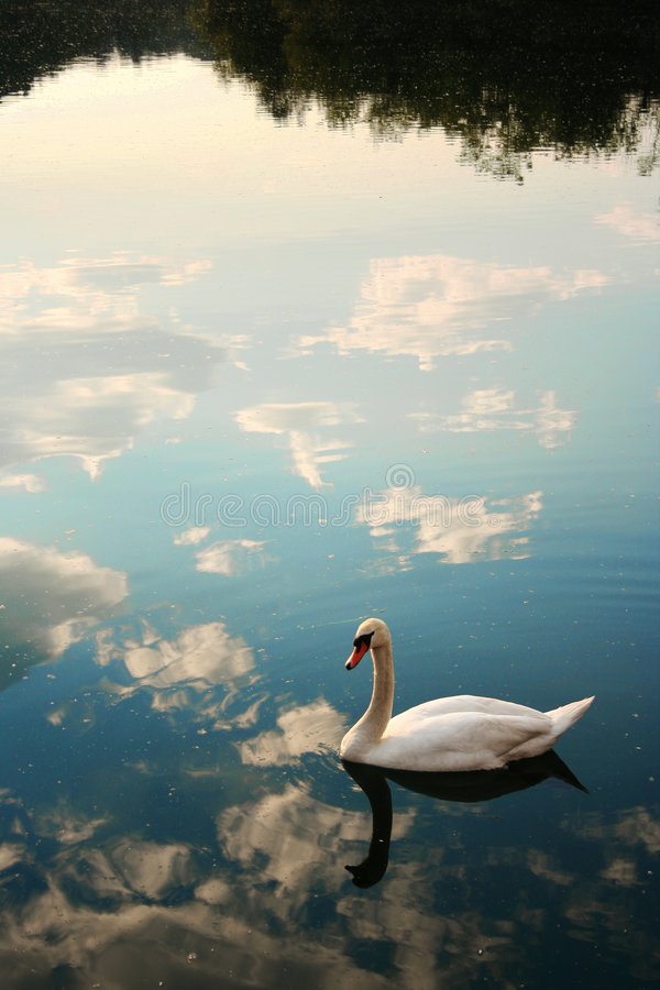 Het zwemmen in de hemel royalty-vrije stock afbeelding