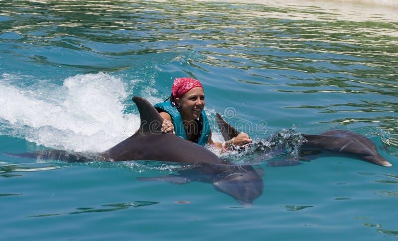 Het zwemmen met de Dolfijnen stock foto's