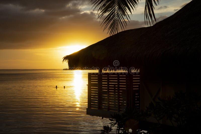 Het zwemmen zonsondergang stock afbeeldingen