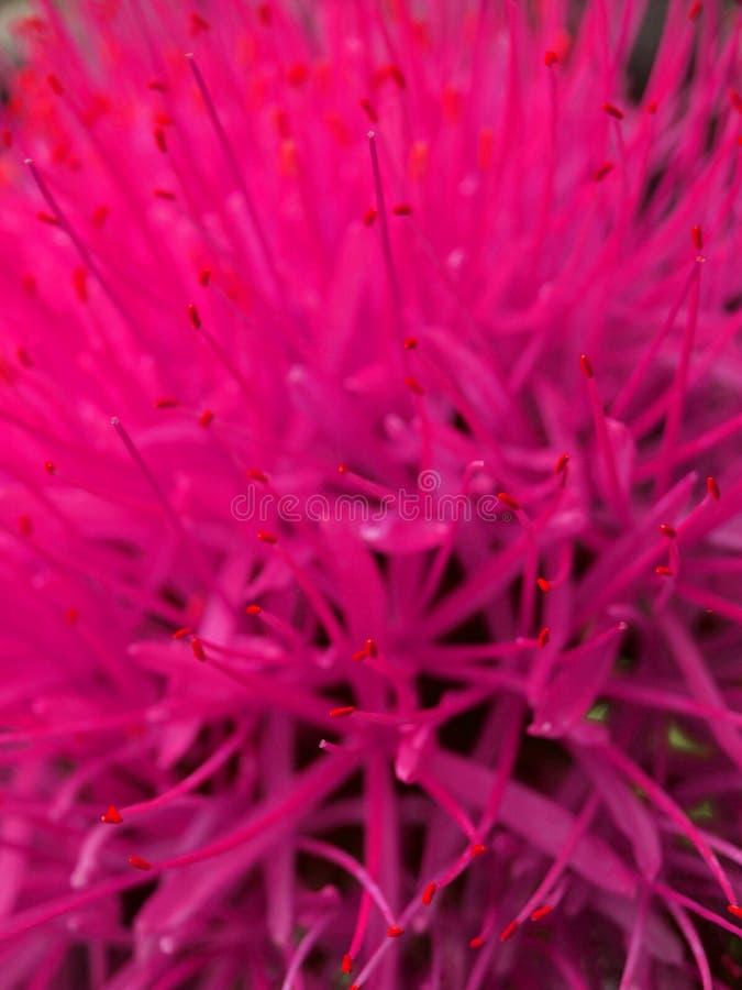 Hete bloem stock afbeeldingen