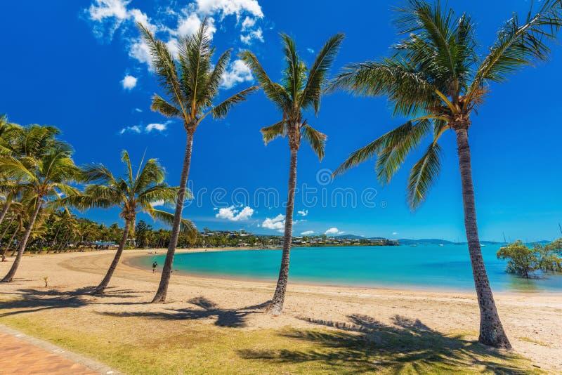 Hete dag op zandig strand met palmen, Airlie-Strand, Pinksteren royalty-vrije stock afbeeldingen