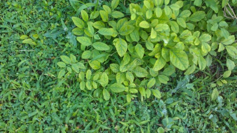 hete groen doorbladert stock afbeeldingen