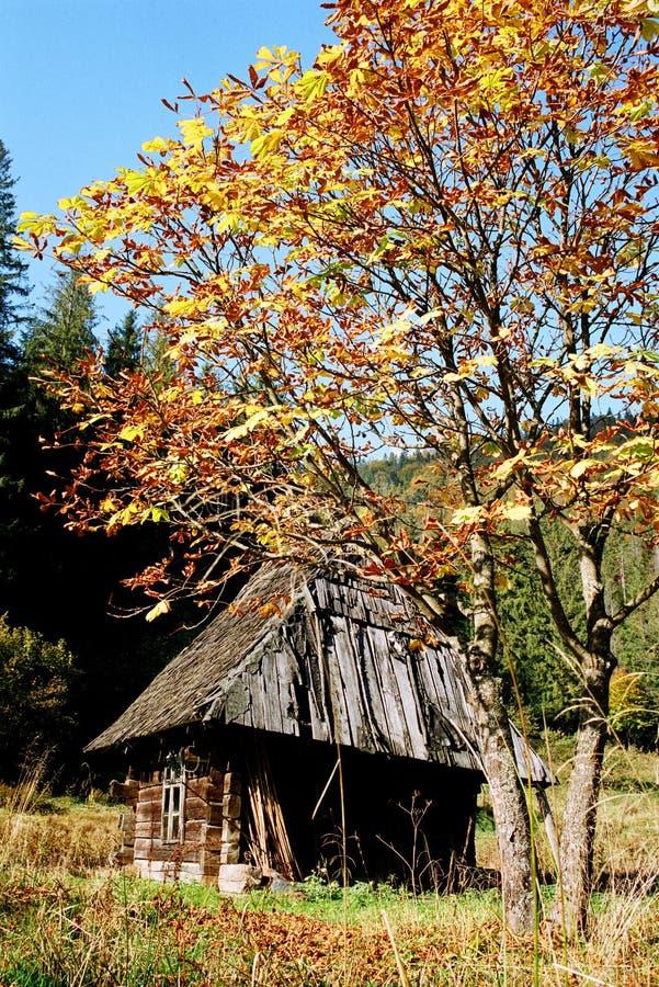 Hete kleuren van het bos in de bergen stock afbeelding