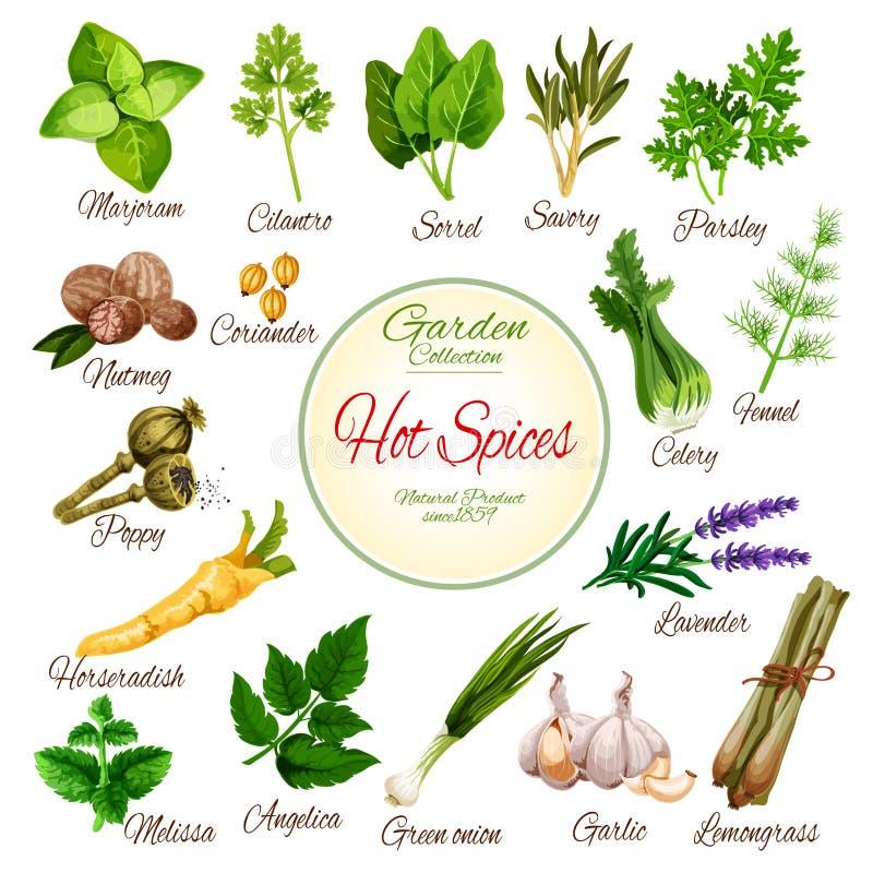 Hete kruiden, kruiden en plantaardige greens affiche stock illustratie