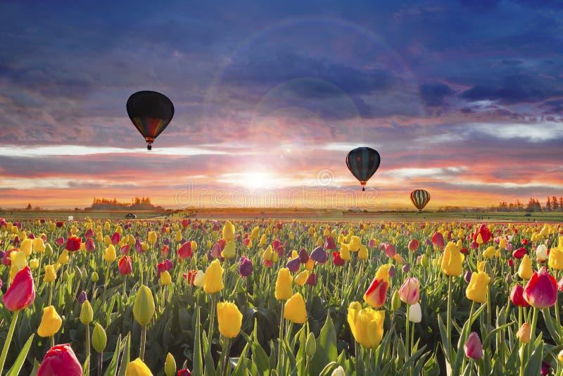 Hete luchtballons bij dageraad stock foto