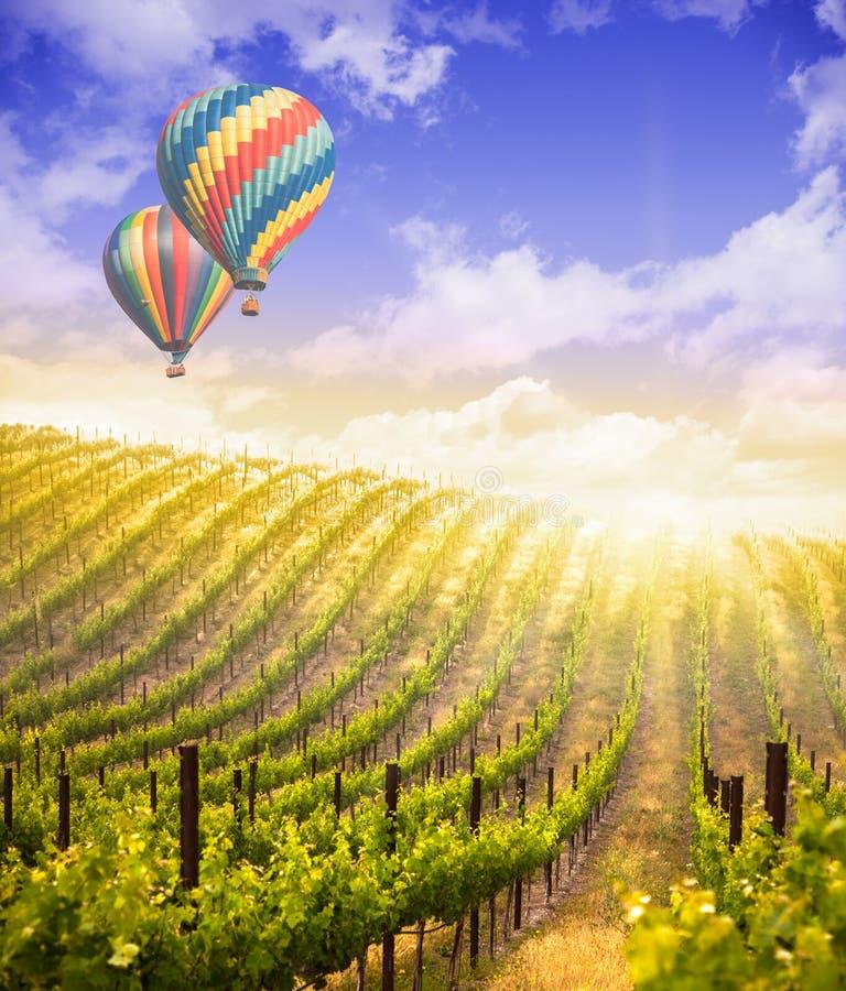 Hete Luchtballons die boven Mooie Groene Druivenwijngaard vliegen royalty-vrije stock foto's