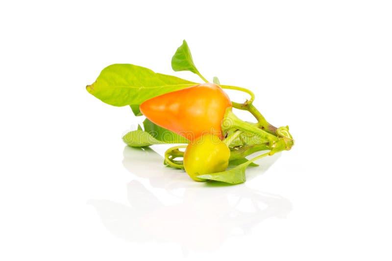 Hete rode oranje die Spaanse peperpeper op wit wordt geïsoleerd royalty-vrije stock afbeeldingen