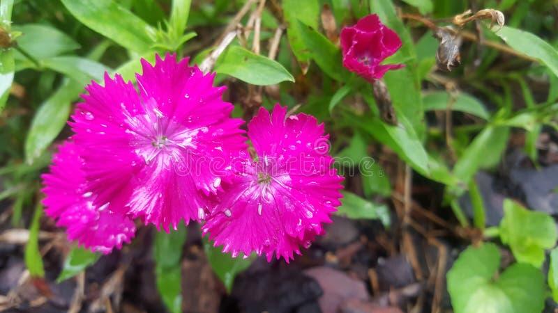 Hete Roze Bloemen stock fotografie