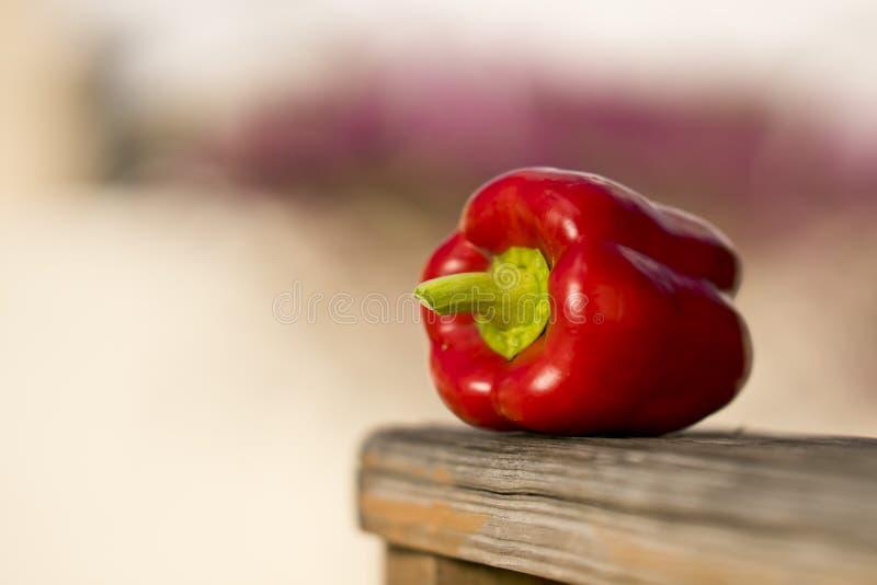 Hete Spaanse pepers royalty-vrije stock fotografie