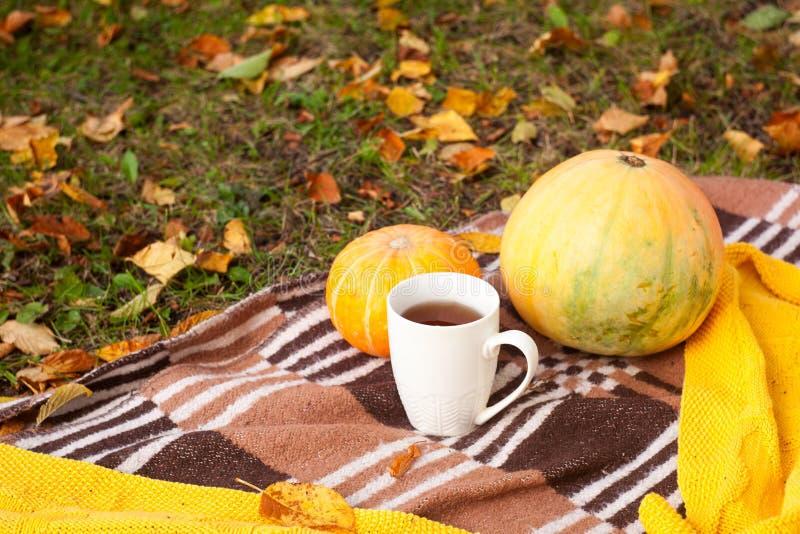 Hete theekop op plaidachtergrond, de herfstbladeren en kleine pompoenen, de herfstpicknick, stemming, romantische de Herfstdankze royalty-vrije stock afbeelding