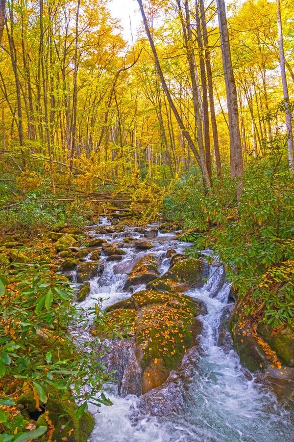 Hetzender Strom, der durch die Felsen und die Blätter des Fall-Waldes läuft lizenzfreie stockfotografie