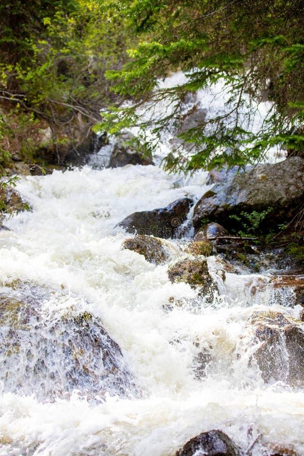 Hetzender Wasserfall mit üppigem Gras in Rocky Mountain National Park lizenzfreie stockfotos