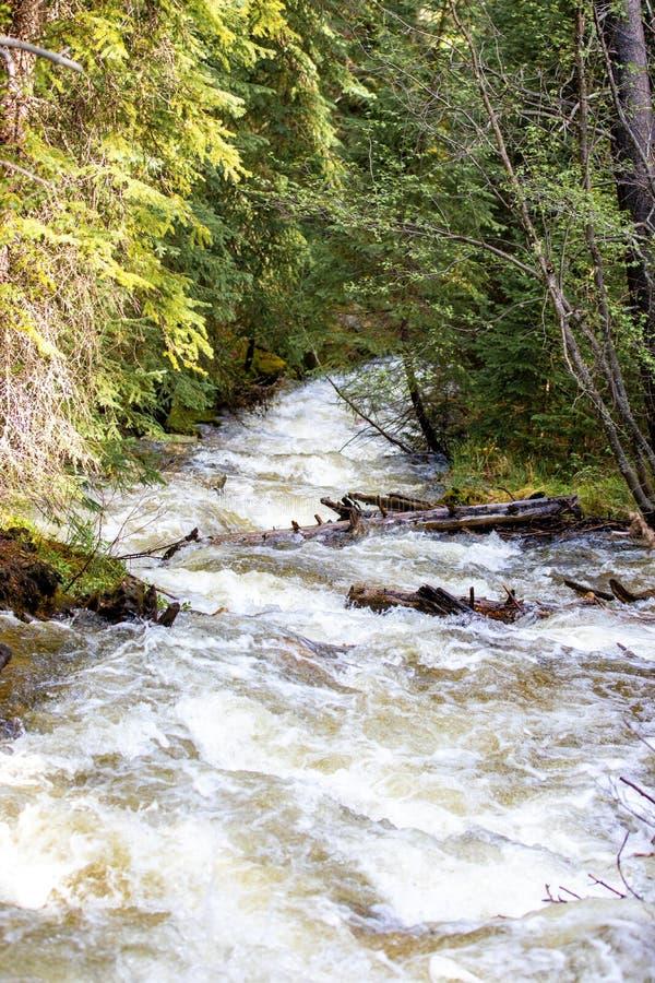 Hetzender Wasserfall mit üppigem Gras in Rocky Mountain National Park lizenzfreie stockbilder