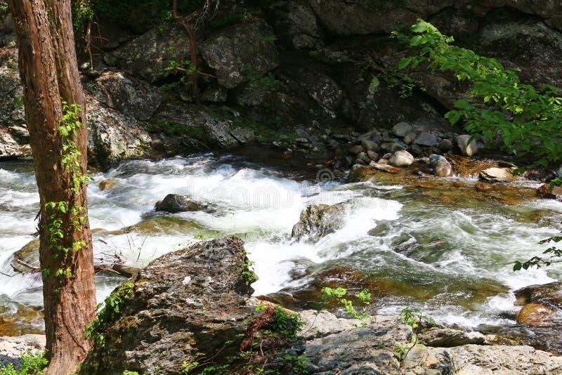 Hetzendes Wasser des kleinen Flusses stockfoto