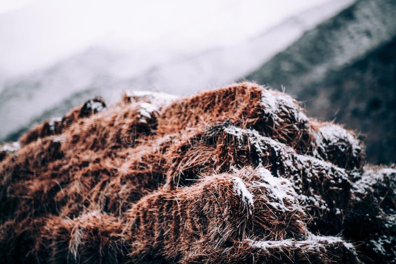 Heu und Schnee lizenzfreie stockfotografie
