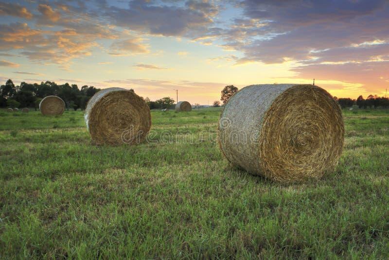 Heuballen auf den Hawkesbury-Gebieten mit einem hübschen Sonnenaufganghimmel beh stockfotos