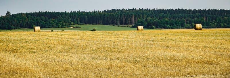 Heuballen auf einem Feld nach Ernte stockfotos