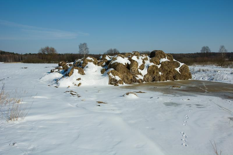 Heuballen bedeckt mit Schnee stockfoto