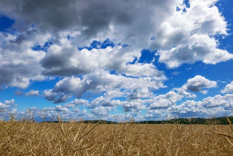 Heufeldwolken stockbild