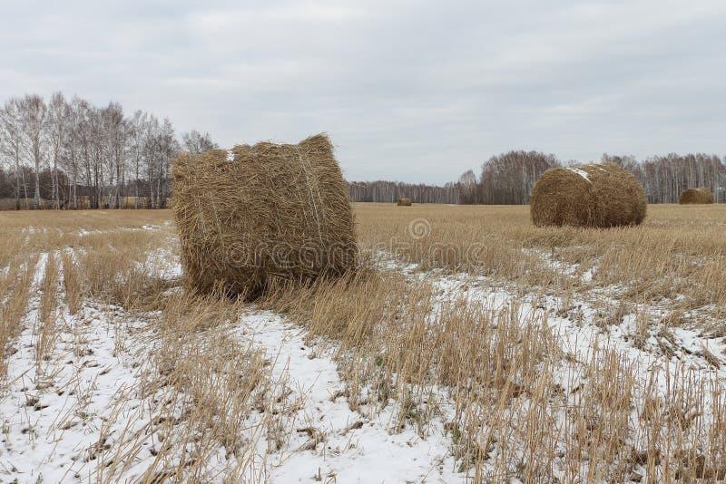 Heugarben auf einem schneebedeckten Feld lizenzfreie stockbilder