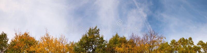 Heure d'automne Feuilles colorées en haut des arbres sur fond de ciel Arrière-plan naturel d'angle très large, format de bannière images stock