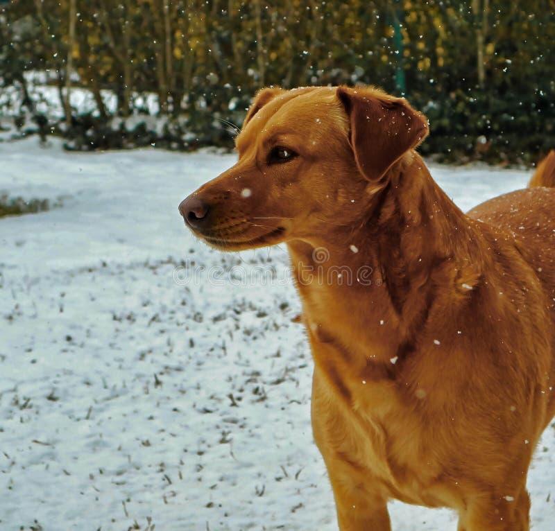 Heures de récréation de neige image libre de droits