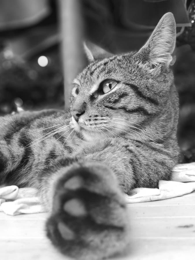 Heureux le chat image libre de droits