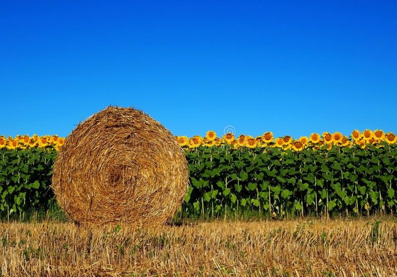 Heurolle vor einem Sonnenblumenfeld lizenzfreie stockfotos