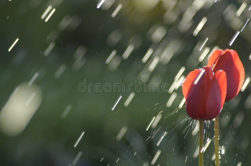 Heurtez par la pluie photographie stock libre de droits