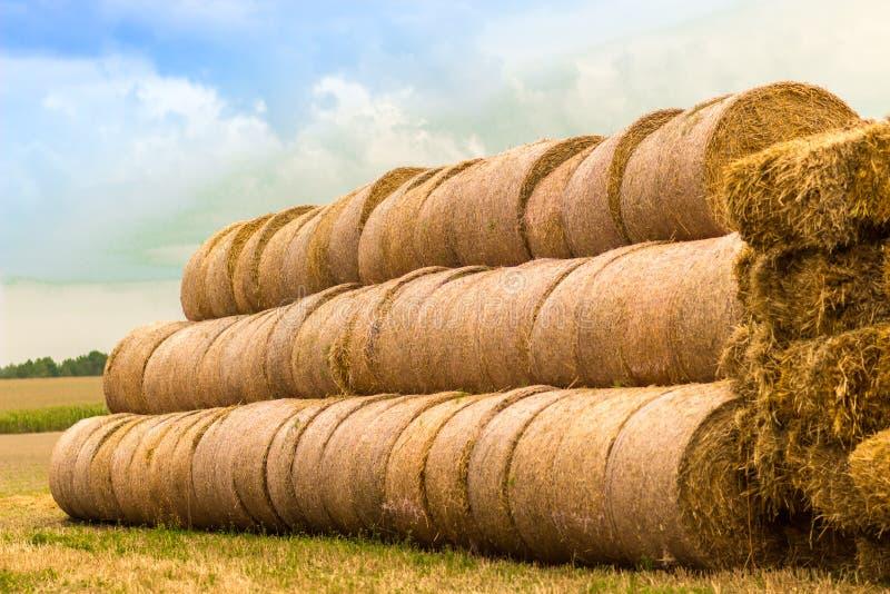 Heuschober angehäuft auf Herbstfeld lizenzfreies stockfoto