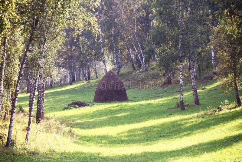 Heuschober in einem Birkenwald lizenzfreies stockfoto