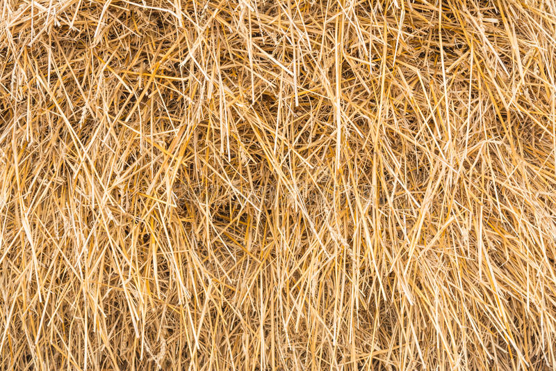 Heuschober, Garbe trockenes Gras, Heu, Stroh, Beschaffenheit, abstrakter Hintergrund stockfoto