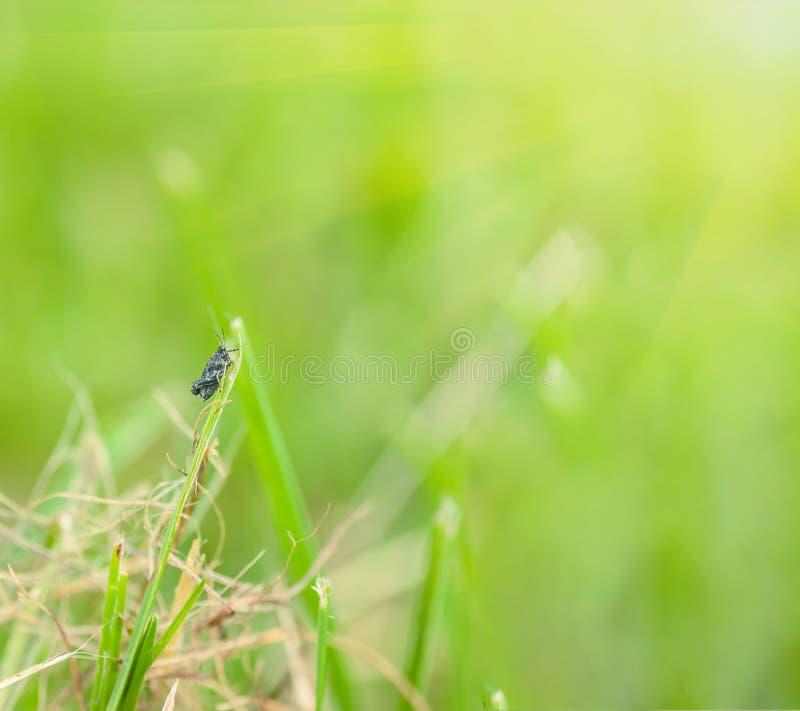 Heuschrecke, die auf Gras sitzt stockfotos