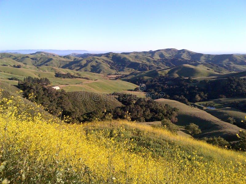 Heuvel in Californië stock foto's