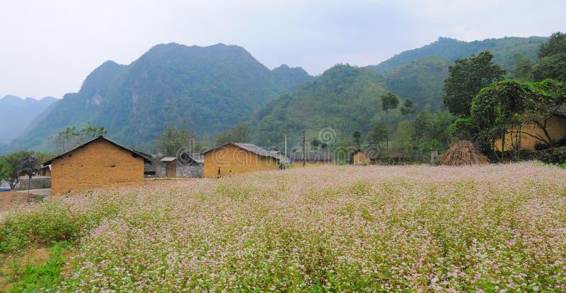 Heuvel van boekweitbloemen stock fotografie