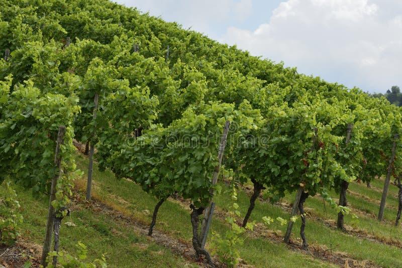 Heuvelige wijngaard #2, Stuttgart royalty-vrije stock foto's