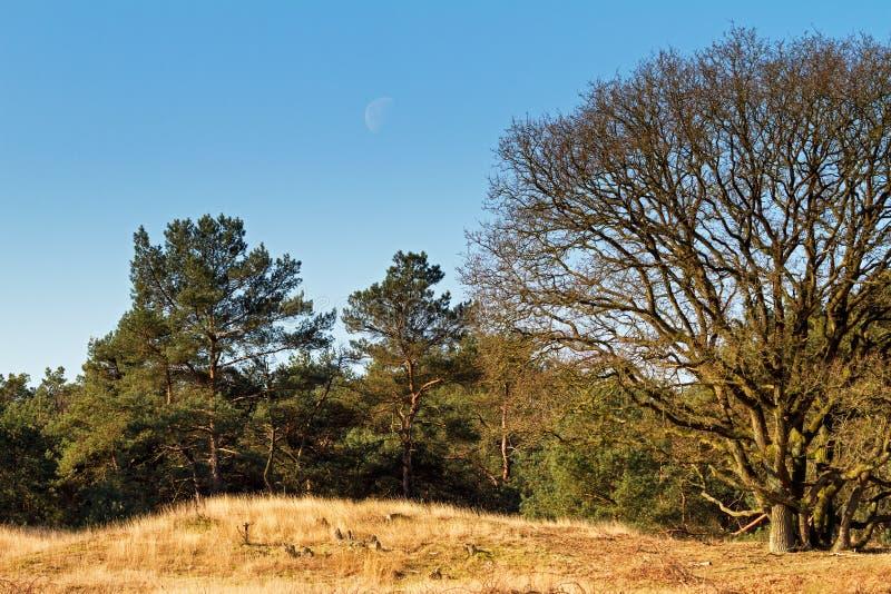Heuvelrug-Mond lizenzfreies stockfoto