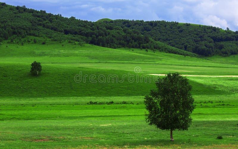 Heuvels en bomen royalty-vrije stock foto